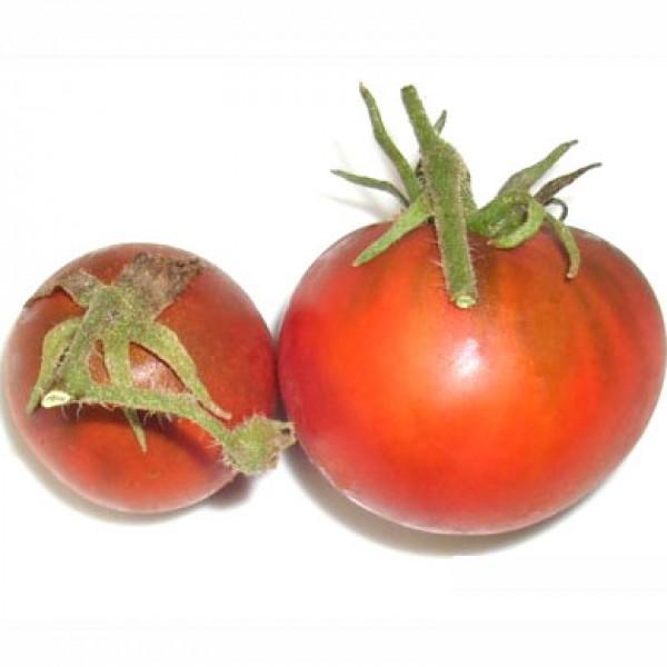 Black Truffle Tomaten Samen