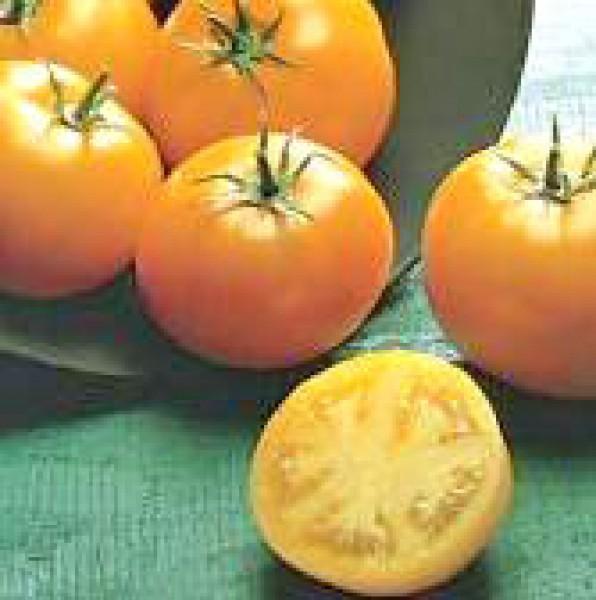 Golden Sunray Tomaten Samen