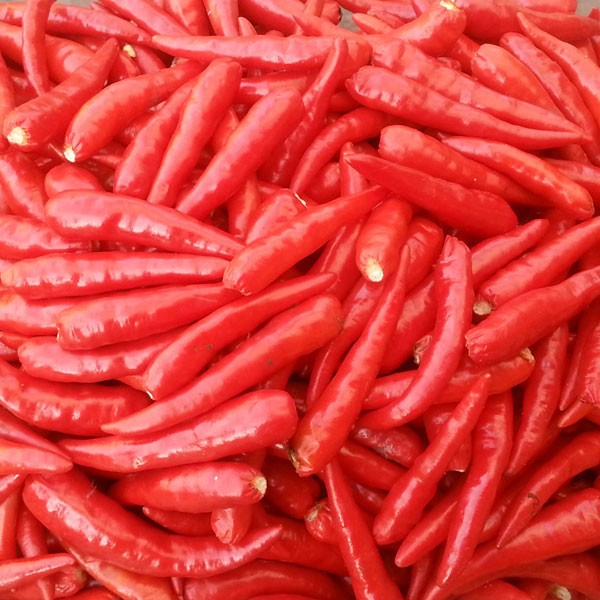 Thai Red Chili Samen