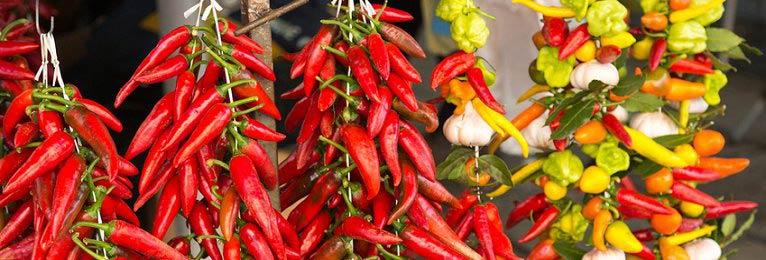 Chili-Samen