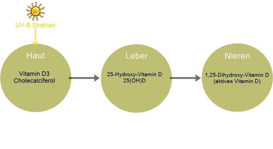 Umwandlung von UV-Strahlung in Vitamin D3