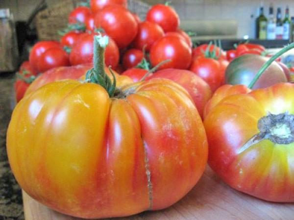 Flame Tomaten Samen