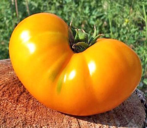 Azoychka Tomaten Samen