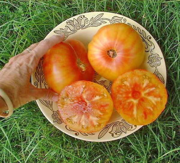 Pineapple Beefsteak Tomaten Samen