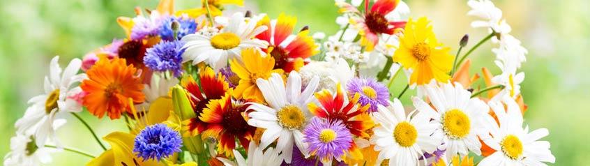 Blumen-Samen