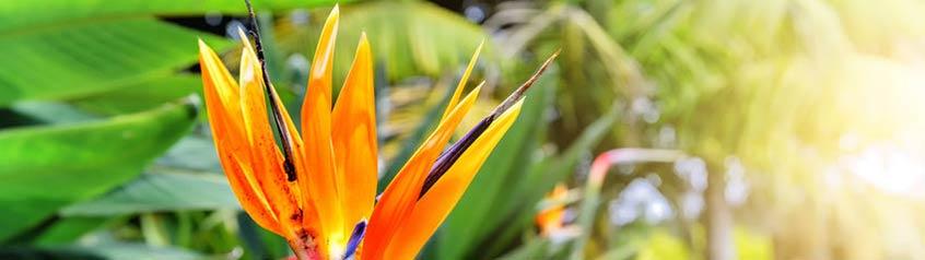 Exotische Pflanzen Samen
