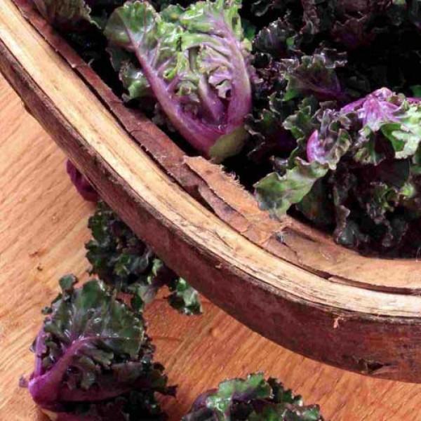Rosenkohl Flower Sprout Samen