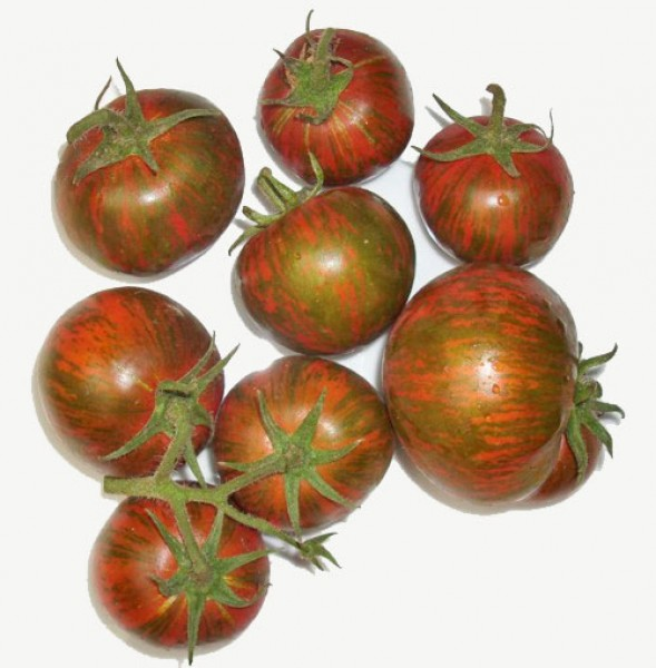Black Zebra Tomaten Samen