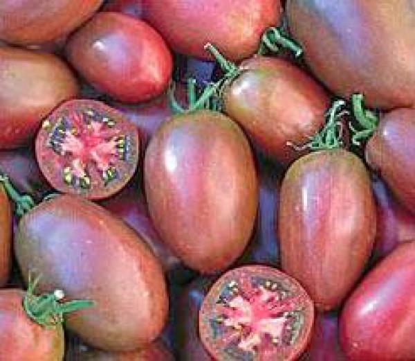 Purple Russian Plum Tomaten Samen