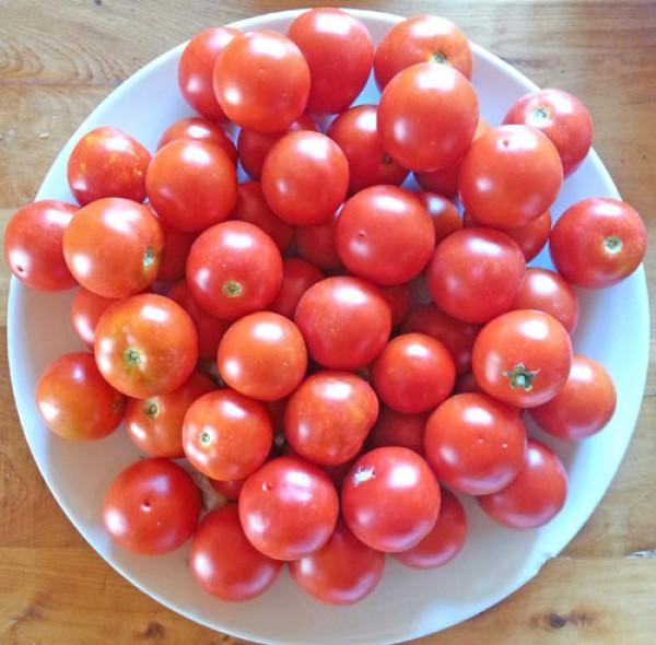 Camone Tomaten Samen